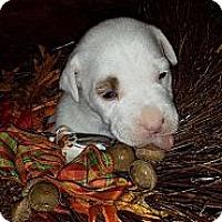 Adopt A Pet :: Elena - Roaring Spring, PA