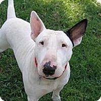 Adopt A Pet :: Tank - Sachse, TX