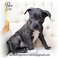 Adopt A Pet :: Boo - New Orleans, LA