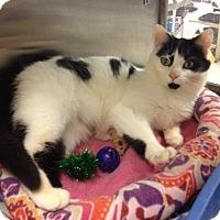 Adopt A Pet :: Lissa - Byron Center, MI