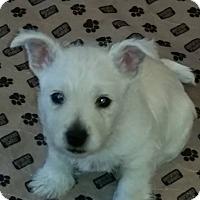 Adopt A Pet :: Alfie - Omaha, NE