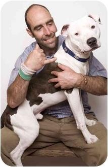 American Staffordshire Terrier Dog for adoption in Corona del Mar, California - Face