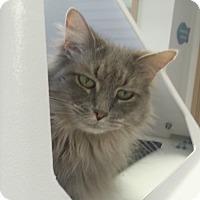 Adopt A Pet :: Elsie - Chesapeake, VA