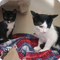 Adopt A Pet :: Bo & Patches - Walnut Creek, CA