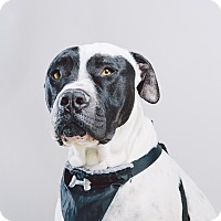 Adopt A Pet :: Petey - Los Angeles, CA
