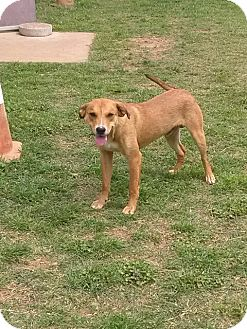 Shepherd (Unknown Type) Mix Dog for adoption in Sand Springs, Oklahoma - Ralph