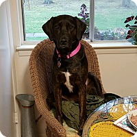 Adopt A Pet :: Lucy - Richmond, VA