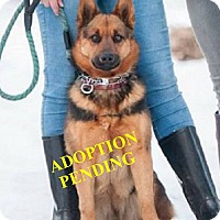 Adopt A Pet :: SADEE - Winnipeg, MB