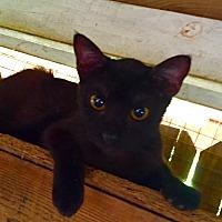 Adopt A Pet :: Moonshine - Floral City, FL