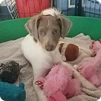Adopt A Pet :: Greyson - Chico, CA