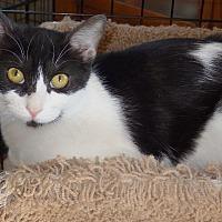 Adopt A Pet :: Kayla - Quail Valley, CA