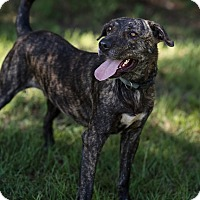 Adopt A Pet :: Coby - Fort Valley, GA