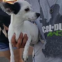 Adopt A Pet :: Tami - Arlington, WA