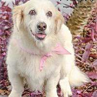 Adopt A Pet :: Ashley - Tampa, FL