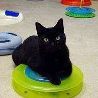 Adopt A Pet :: Porsha - Belleville, MI