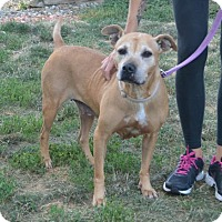 Adopt A Pet :: Gigi - Akron, OH