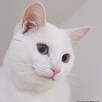 Adopt A Pet :: Clara - Marietta, GA