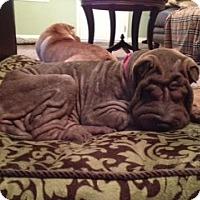 Adopt A Pet :: Jewel - Gainesville, FL