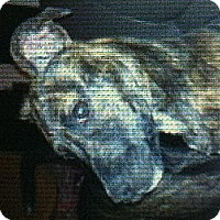 Adopt A Pet :: Georgia - New Washington, IN