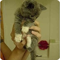Adopt A Pet :: JC-05-4-1 - Davis, CA