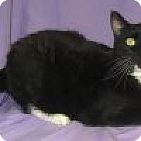 Adopt A Pet :: Gabriel - Powell, OH
