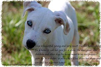 Dalmatian Mix Puppy for adoption in Buchanan Dam, Texas - Elsa