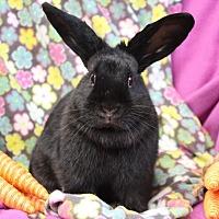 Adopt A Pet :: Max - Erie, PA