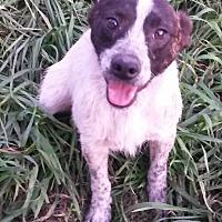 Adopt A Pet :: Rowdy - East Hartford, CT