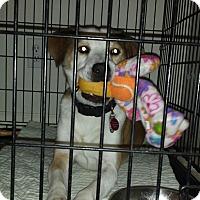 Adopt A Pet :: SILAS - Wilmington, NC