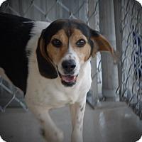 Adopt A Pet :: Sylvia - Wilmington, OH