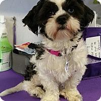 Adopt A Pet :: Dori Turner - Urbana, OH