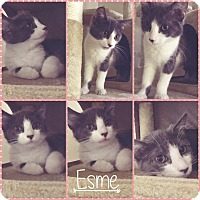 Adopt A Pet :: Esme - Wichita, KS