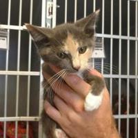 Adopt A Pet :: Nova - Russellville, KY