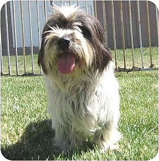 Terrier (Unknown Type, Medium) Mix Dog for adoption in Encino, California - Rolo