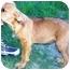Photo 4 - Schnauzer (Miniature)/Hound (Unknown Type) Mix Puppy for adoption in Osseo, Minnesota - Stanley