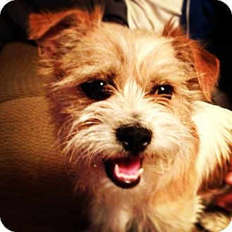 Terrier (Unknown Type, Medium) Mix Dog for adoption in Salt Lake City, Utah - LACI