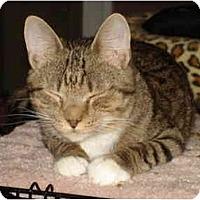 Adopt A Pet :: Edmund - Chesapeake, VA