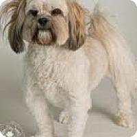 Adopt A Pet :: Henry - Phoenix, AZ