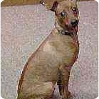 Adopt A Pet :: Hot Rod - Florissant, MO