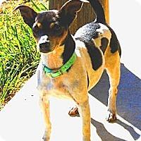Adopt A Pet :: Minuet - Oklahoma City, OK