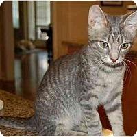 Adopt A Pet :: Jeffrey - Woodstock, GA