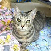 Adopt A Pet :: Rose - Fredericksburg, VA