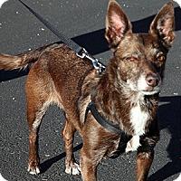Adopt A Pet :: Chandler - Gilbert, AZ