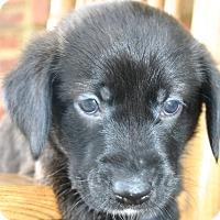 Adopt A Pet :: Benjamin - Knoxvillle, TN