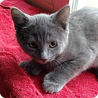 Adopt A Pet :: Marlena - N. Billerica, MA