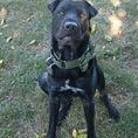 Adopt A Pet :: ODIN AKA OTIS - Southampton, NY
