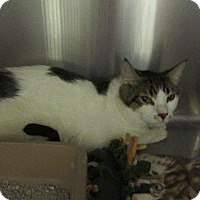 Adopt A Pet :: Rian - Grand Junction, CO