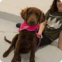 Adopt A Pet :: Fanny - Muldrow, OK