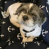 Adopt A Pet :: LINUS - NYC, NY