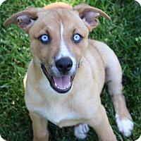 Adopt A Pet :: D24 Litter-Myla ADOPTED - Livonia, MI